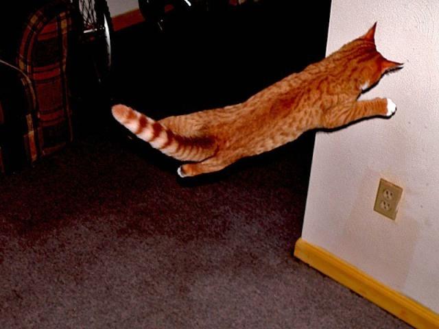 Lidojošie kaķi 5