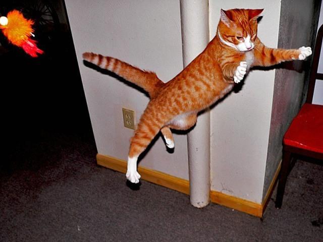 Lidojošie kaķi 6