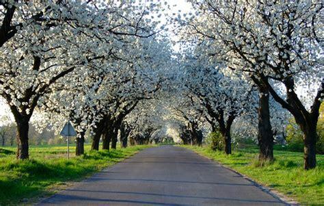pavasaris.jpeg